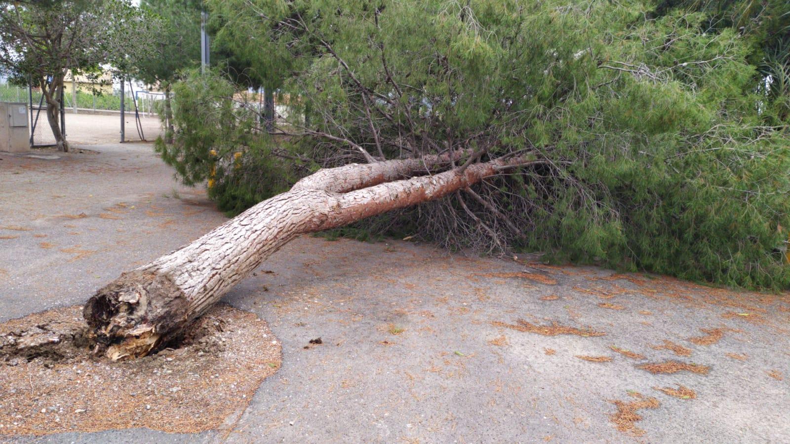 El PSOE solicita la revisión del arbolado en los espacios públicos de Lorca tras el reciente temporal de lluvias y viento