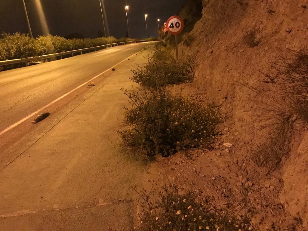 El PSOE denuncia el peligroso y lamentable estado de abandono que presenta la entrada a la ciudad de Lorca por la zona de Las Palmeras